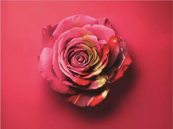 法兰西玫瑰