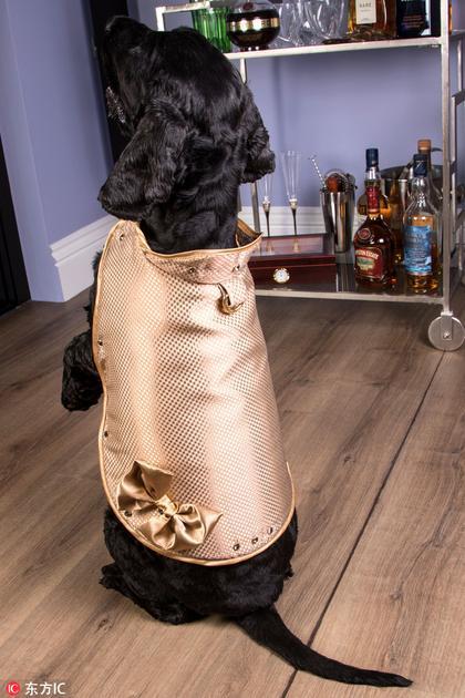 全球最贵的狗狗外套