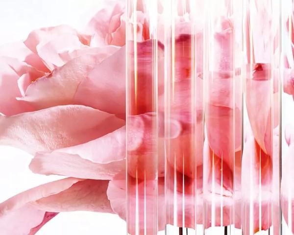 兰蔻对玫瑰情有独钟
