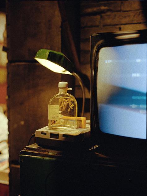 致敬纯粹90年代——观夏「金银花1990」上市