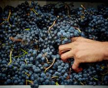 葡萄酒酿造工艺