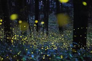 夏天最好的雨林在西双版纳 住悦椿、看萤火虫......