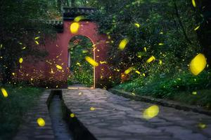 南京灵谷寺又火了 有萤火虫的夏天最美