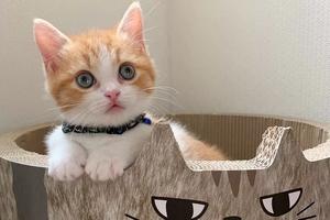 日本一小奶猫成精 睡姿萌化网友!