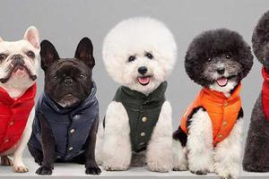 一个正在崛起的时尚领域:给宠物买衣服你舍得花多少钱?