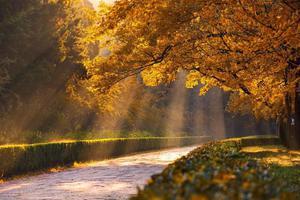 一到秋天 南京就美成了金陵