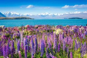 12月和冬天分手 去南半球看花开成海吧