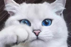 全球颜值超高的29只猫咪 快来云吸猫