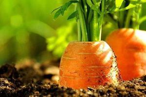 如何用厨余垃圾 在家开垦小菜园?