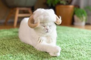 """猫毛过敏的""""铲屎官"""" 用它们的毛做出超萌帽子"""
