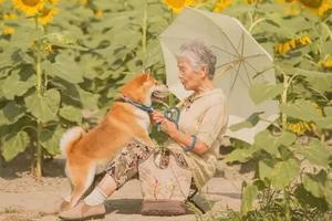 日本奶奶和柴犬相依为命 又同患痴呆症被迫分离