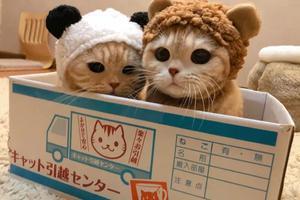 """这只网红猫咪凭""""吐舌头""""撩倒200万粉丝"""