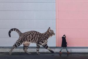 """俄罗斯硬汉""""养""""了只3米高的猫 引百万网友围观"""