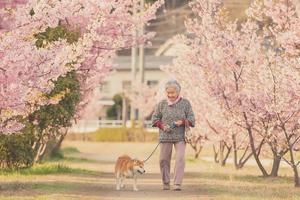 樱花树下奶奶和柴犬的一组照片 暖哭12万网友