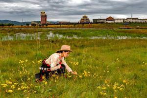 中国唯一以黄河命名的地方 甘南最美的绿色在这