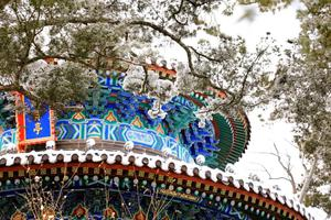 大雪过后的北京 你一定要去看看