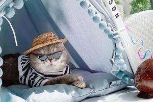 """美国这只""""绅士猫""""火了 时尚穿搭满分"""