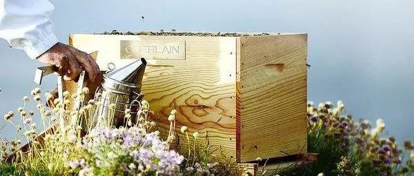 娇兰臻选来自法国索洛捏的独家蜂皇浆和黑蜂蜂蜜