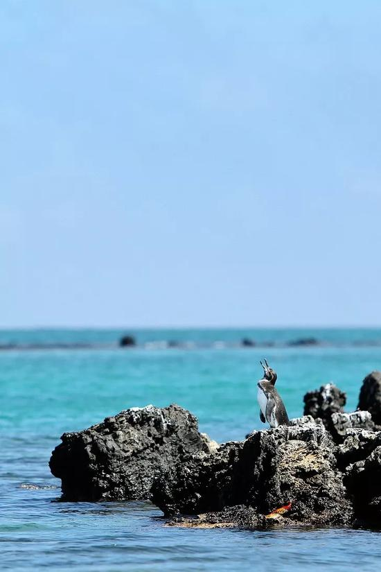 因其与世隔绝的地理环境,加拉帕戈斯保留着许多特有的物种