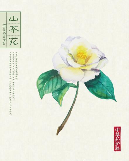 本草背景(40.6x50.6)-04