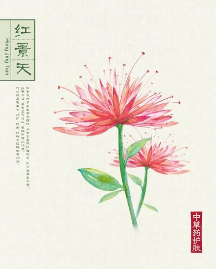 本草背景(40.6x50.6)-05