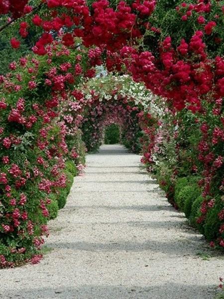 浪漫的花园式拱门