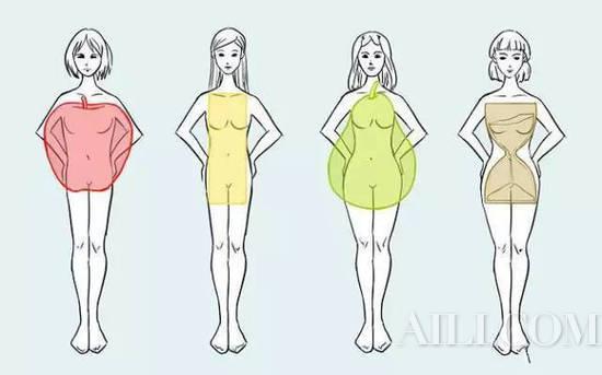 体型的种类
