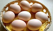 鸡蛋期货深贴水持续 节后把握节奏