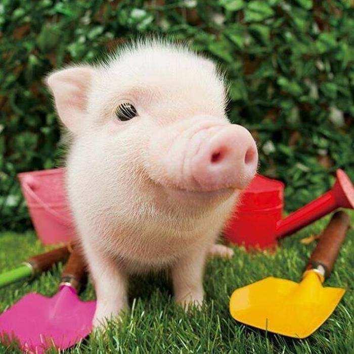 牧原股份首席战略官谈猪周期 三季度的生猪价格相对较高