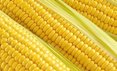 玉米期权上市一年定价效率高 日均持仓量43万手
