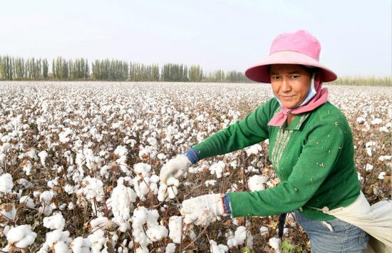 专家:推进转基因研发进度 提升我国棉花产业安全