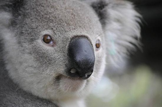 澳大利亚央行在以太坊上模拟测试央行数字货币