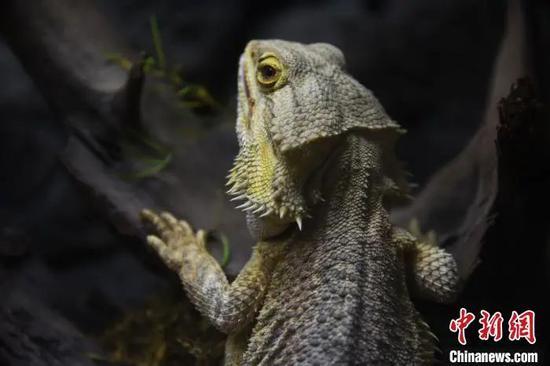 深圳:狗、蛇、田鸡、甲鱼等或将被禁食