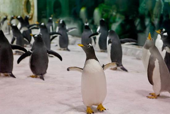 问询风云:卖企鹅卖出一笔糊涂账?更改重要会计凭证 大连圣亚仍存退市风险