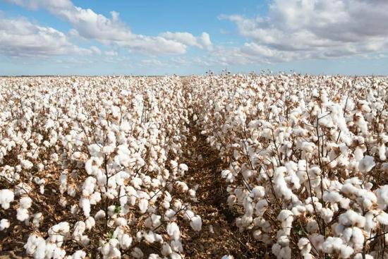 """多因素促棉价创近10年新高 部分上市公司表态""""不会对业绩造成巨大影响"""""""