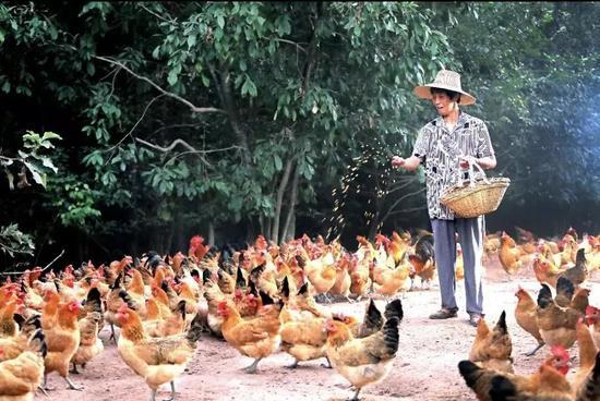 卖车卖房也要确保员工有饭吃的老乡鸡做对了什么?