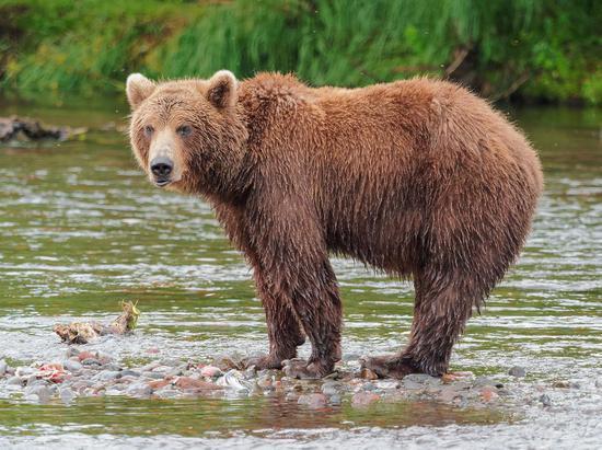 """一场有准备的""""屠熊""""行动"""