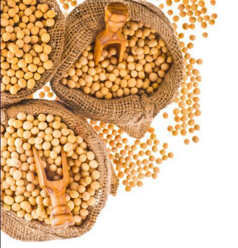 中美贸易战左右市场格局 4季度大豆进口渠道引人瞩目