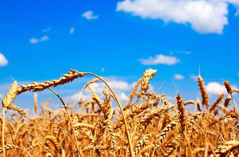 苏宁金融研究院:疫情会引爆全球粮食危机吗?