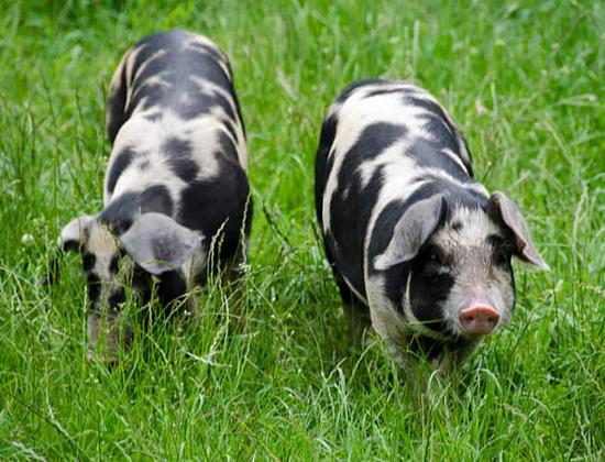 猪圈造价堪比五星酒店 牧原股份解释清楚了?