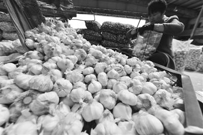 """4月18日,山西省太原市河西农副产品批发市场,大蒜批发商正在整理待销的大蒜。入春以来,大蒜价格大幅上涨,中国各地频出""""蒜你狠""""新闻。 东方IC 供图"""