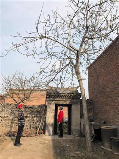4月3日,安新县小王村村民袁玉山和老伴站在院子里。新京报记者 付珊摄