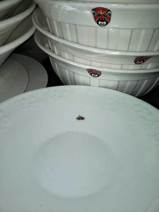 餐盘上的蟑螂