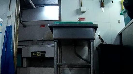 2017年5月29日,凌晨3点26分,记者在海底捞劲松店初加工间拍摄的老鼠。