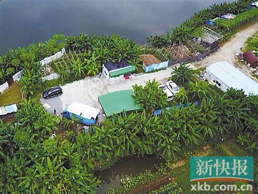 ■黑油站隐藏在路旁一片香蕉林里,颇为隐蔽。