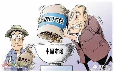 中国玉米是否会步大豆后尘?