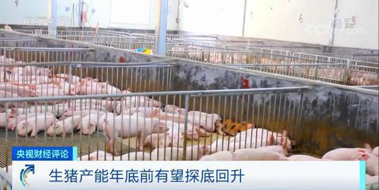 生猪产能有望探底回升 肉价啥时稳?
