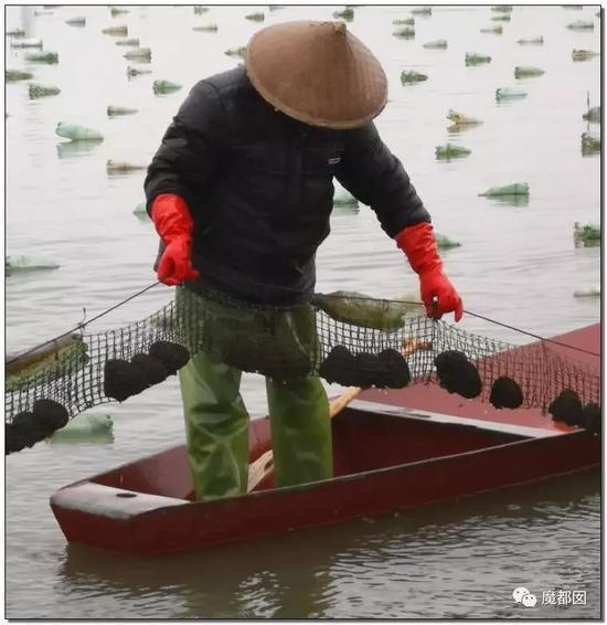 小镇、情趣内衣、小提琴…中国超猛情趣横扫全吵架也棺材是图片