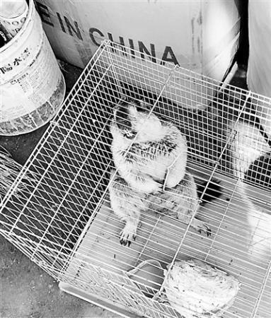 <b>土拨鼠销售资质界定模糊 网红萌宠带来诸多危险</b>