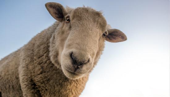 我们是羊毛派对:与电子商务平台合作关闭店主